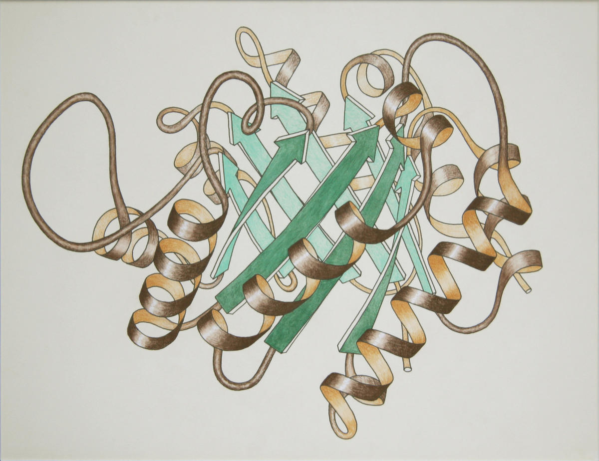 Triose PhosphateIsomerase Ribbon drawing